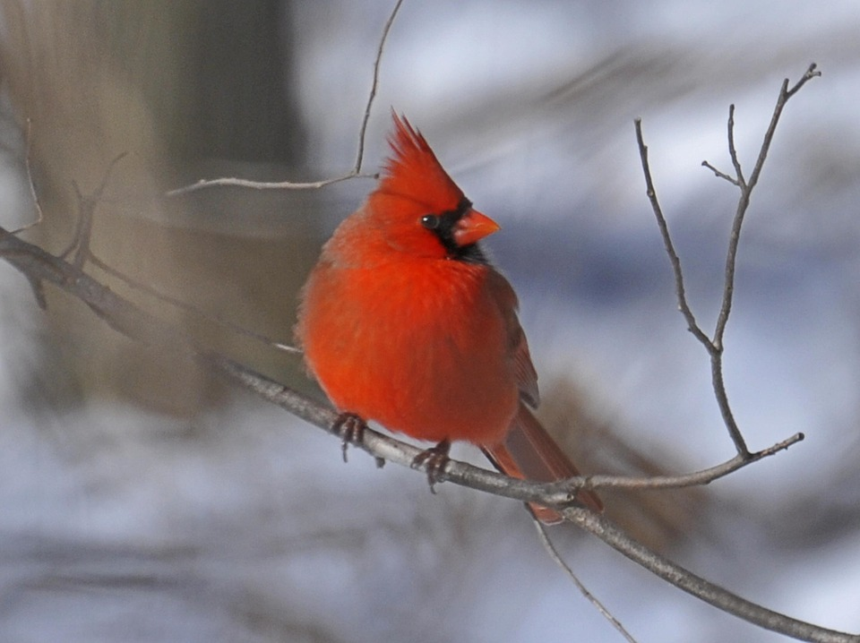 A simple guide to attracting birds to your garden in winter