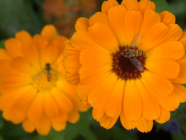 Gardening lingo tips, and a table in the garden