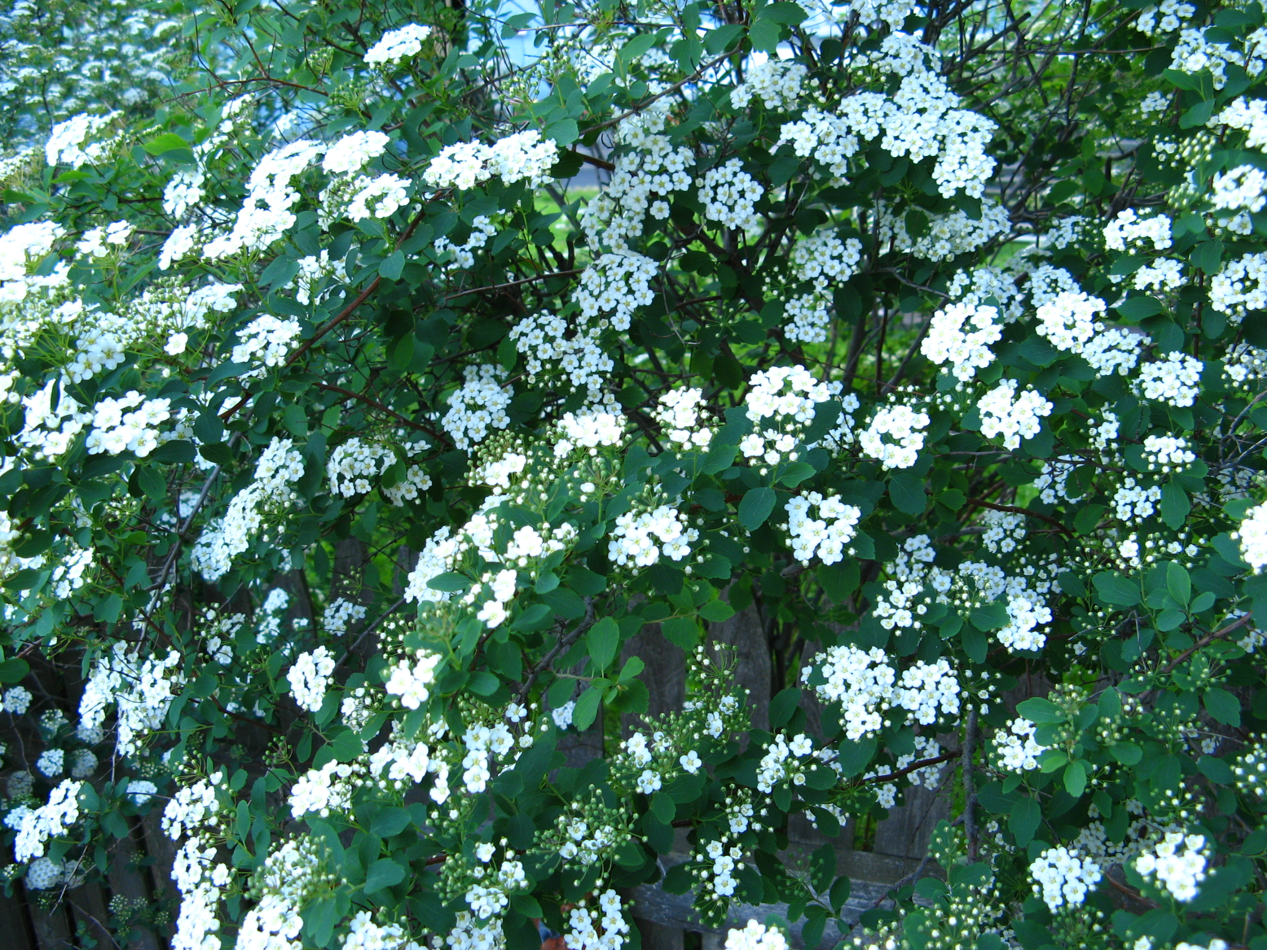 Spring is here - April shrubs, ground cover and must-haves