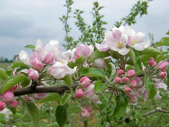 Plant for fruit from your garden