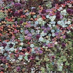 The wide range of succulent colour and form
