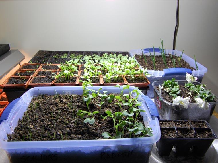 Create a garden indoors with houseplants