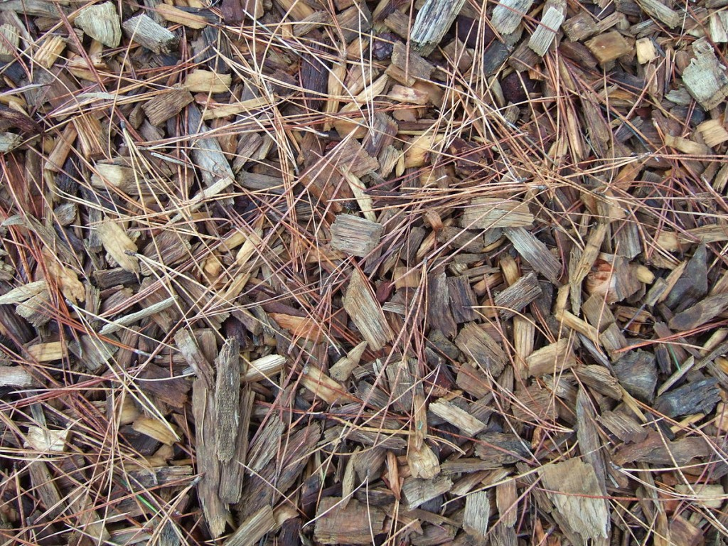 Mulch of woodchips at RHS Wisley, Surrey, protects and improves the soil. Miss Marple