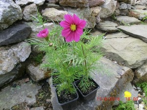 Fill gaps in your garden
