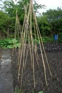 Garden care for vegetable plants