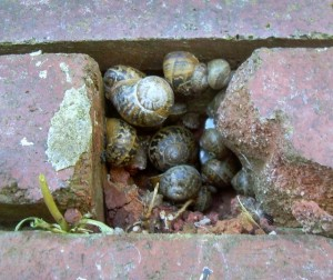 Help! Slugs and snails are destroying my garden!