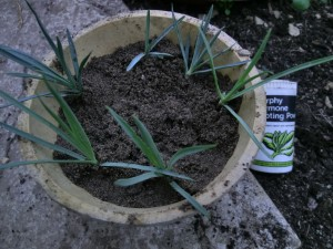 More free plants to share with your family and friends