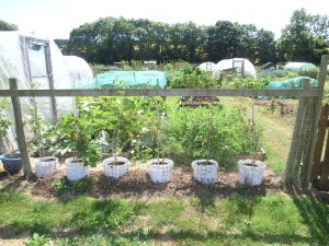 Grow your own veg: August is the start of next year's crop