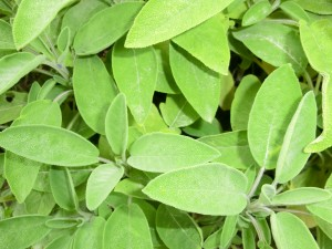 Store herbs