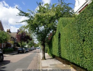 Trim your hedge!