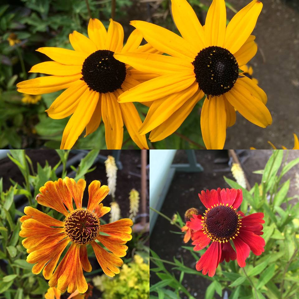 Portishead garden transformation – a look at some gorgeous plants