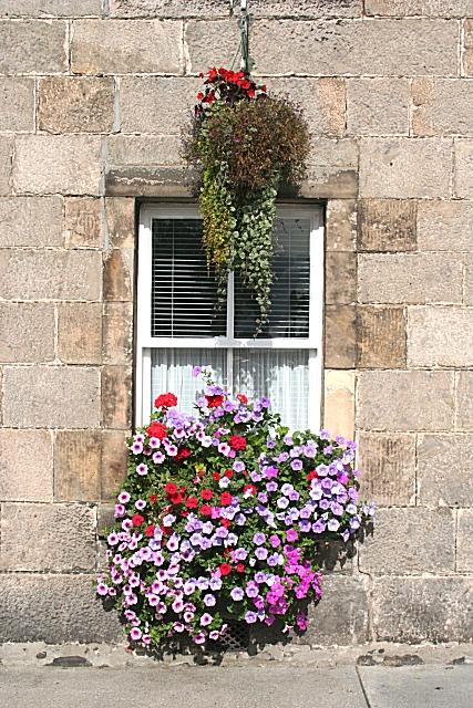 A cheerful window box, Fochabers Square, Moray. Peace