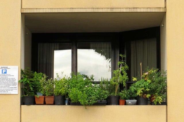 Window garden overlooking River Thames. Peace