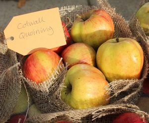 Plant trees now, and celebrate Apple Day!