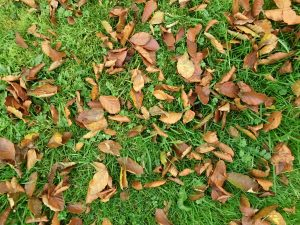 Leaf mould - make the most of the autumn leaves bonanza!