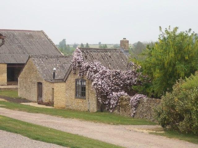Clematis at the Grange, near Heythrop, Oxfordshire. Autumn rains