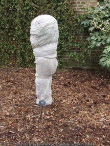 Autumn preparations for winter in the garden: part 3!