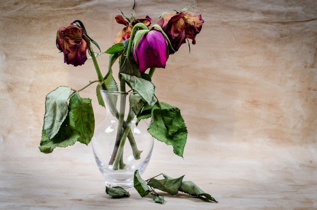 How sad these roses look. They're too far gone now but a bit of care and attention (and water!) earlier would have kept them going for longer. Flower preservative
