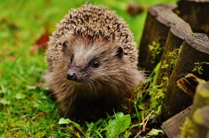 Protect wildlife on Bonfire Night, and use the ash in your garden