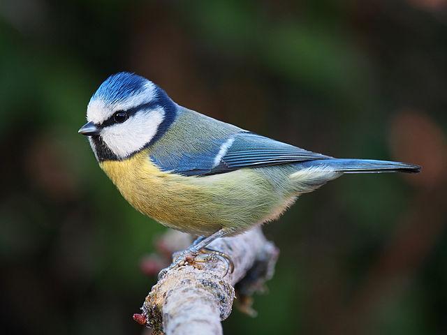 Take part in Big Garden Birdwatch, the world's biggest wildlife survey!