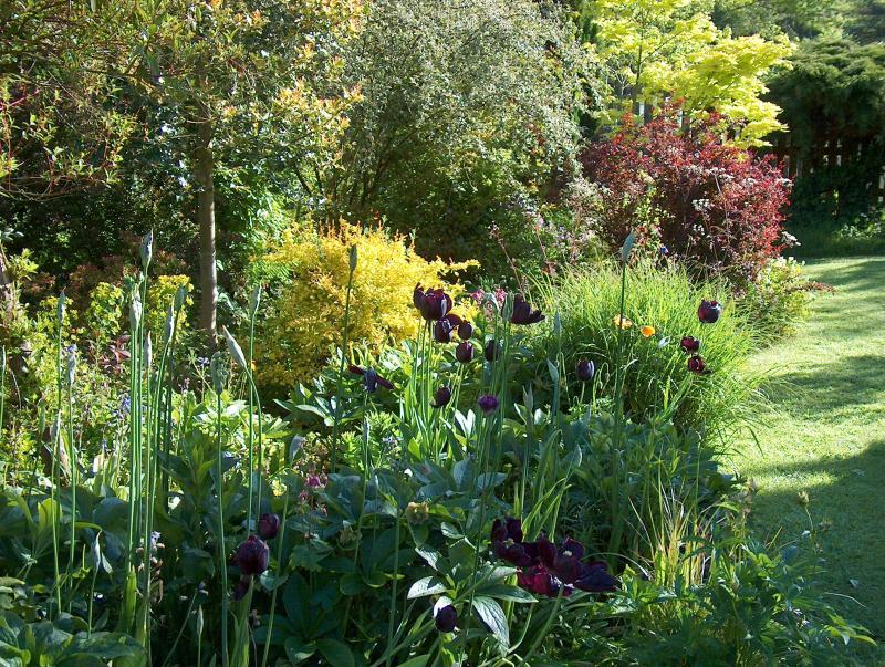 Plan your dream garden