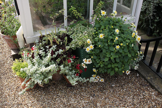 Garden compost and potting compost – why you need both