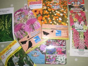 Fill gaps in your garden - sow flower seeds now