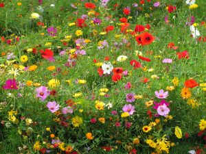 Develop a low maintenance garden by working with nature
