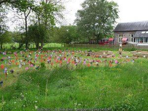 School gardens - help yours to grow!