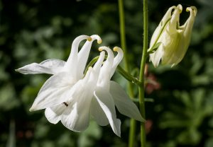 What's in a name? Plant names explained