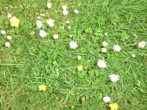 Lawns - get ready for summer in spring