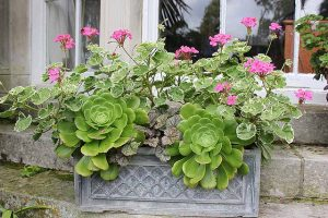 Plant pots, containers, planters – 7 common questions answered