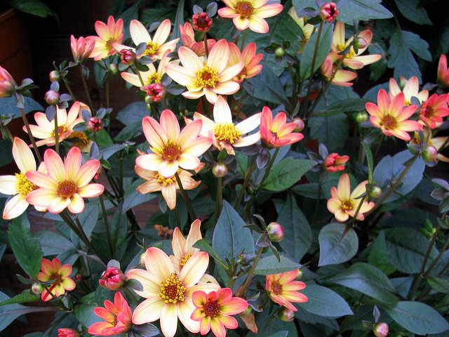 3 tips for August bank holiday in the garden