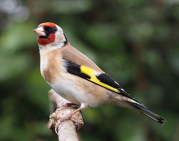 Identify those birds in your garden!