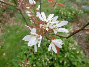 Spring blossom - and year round interest