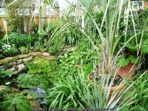 Garden ponds and water features – time for a spring clean!
