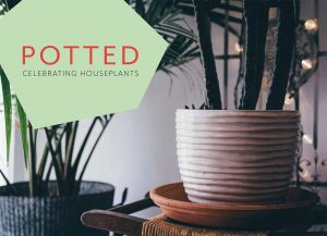 Pots for indoor plants – choose pots to complement your plants