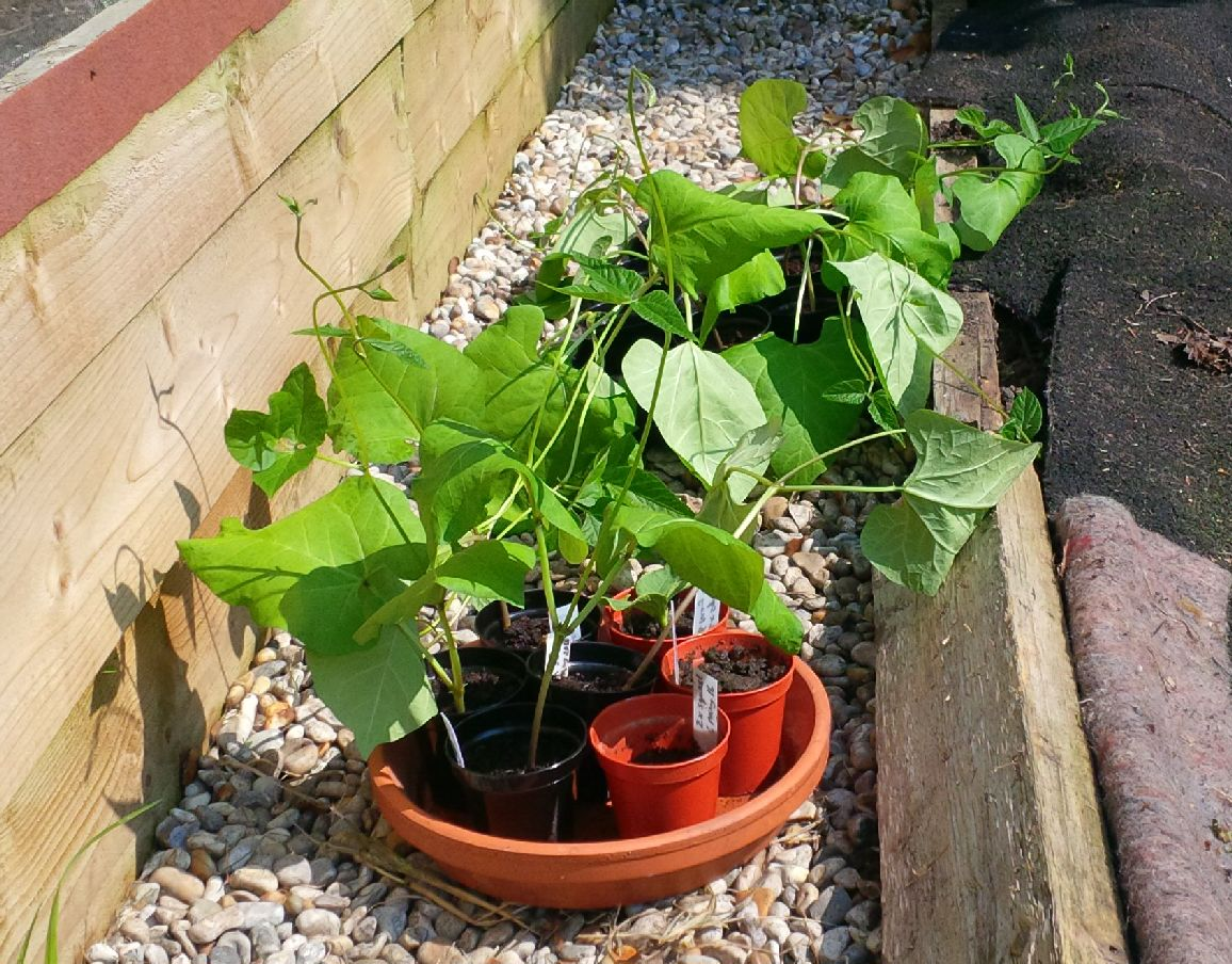 Half-term project: planting out young plants