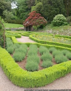 Garden hedges for edges: choosing and caring for dwarf hedges
