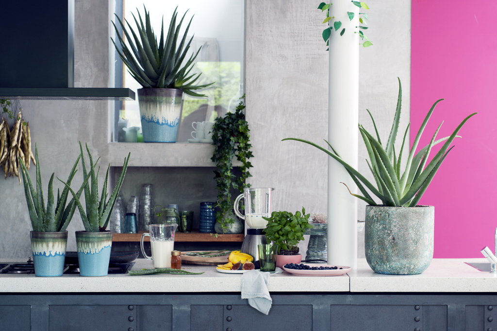 Bring the outdoors in: how to make a room feel more like a garden