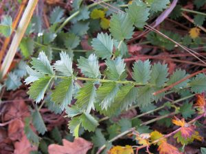 Grow winter salad leaves from seed
