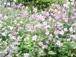 Winds and breezes - choose plants to suit your garden and patio