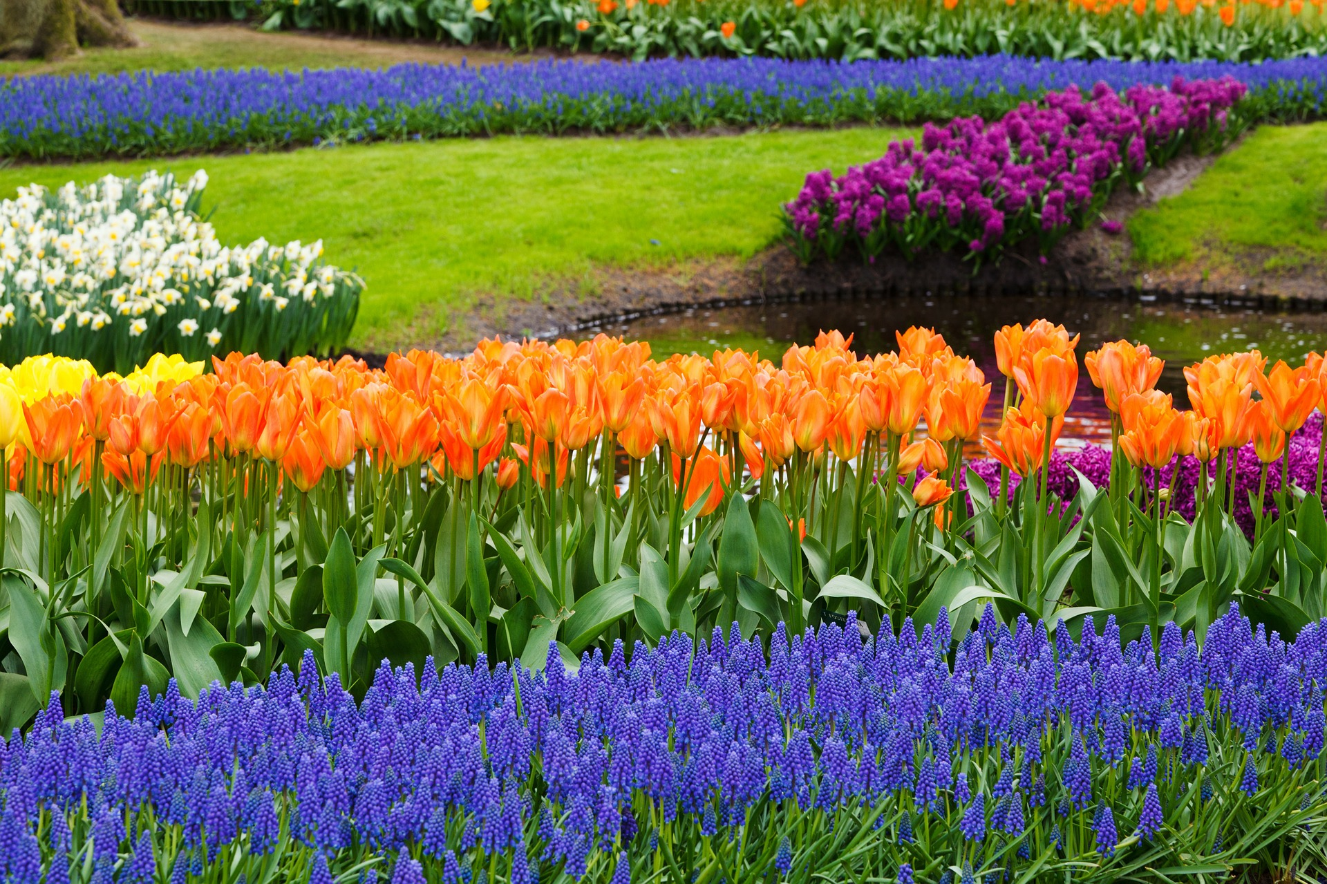 plant winter bedding and biennial plants and spring bulbs now