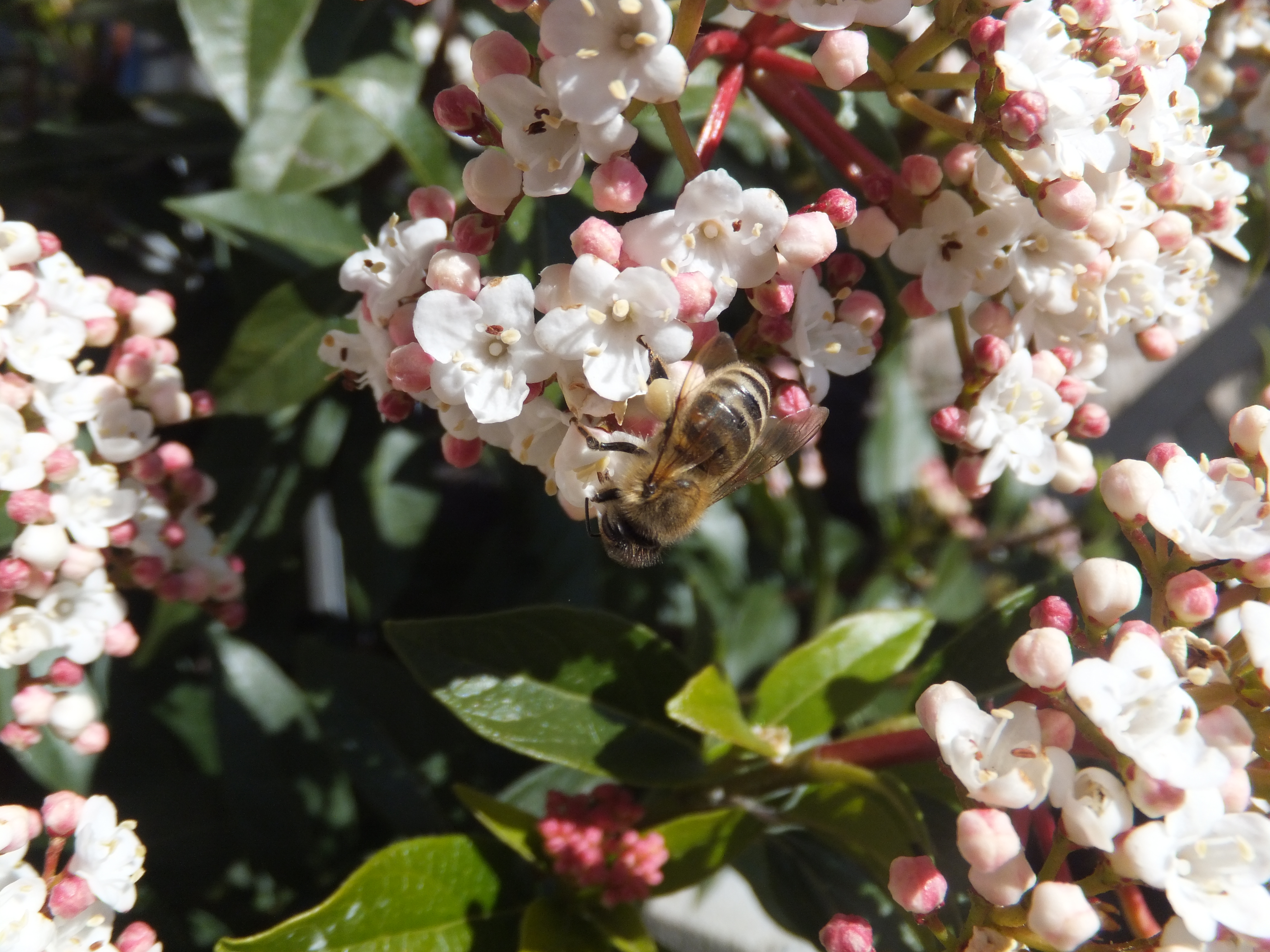 Bees need your garden space! How your garden can support them