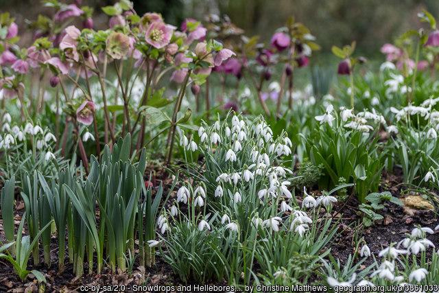 Spring colour in your garden - act now!