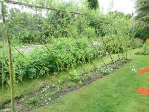 Willow screens, arbour, arch or den: grow your own!