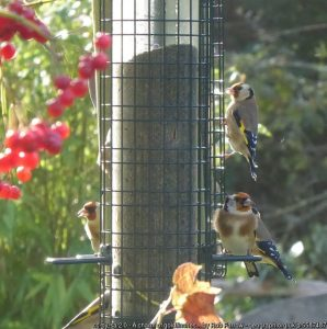Feed garden birds this winter: it's good for them and for you!