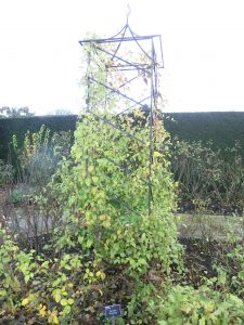 Support plants: use stakes, grids and twigs
