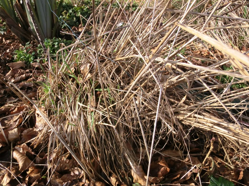 Ornamental grasses tidy up now for strong plants in the for Different ornamental grasses