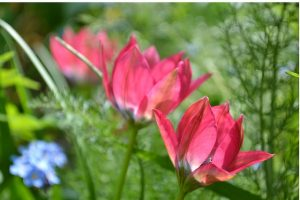 Plant breeding makes 'improved' plants but don't forget ordinary species!